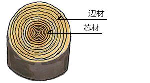 構造材の品質